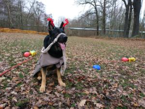 2018 Obedience Weihnachtstraining2