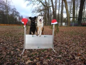 2018 Obedience Weihnachtstraining3